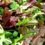 Mesclun Lettuce Mix